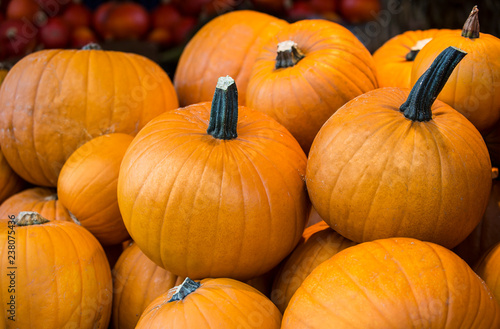 Pumpkin collection in a country store - 238075436