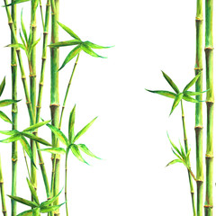 Bamboo forest spa background. Watercolor hand drawn green botanical illustration with space for text © Olga