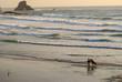 Surfing California Coast