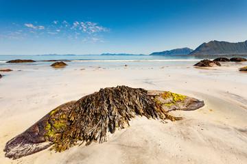 Sea coast with sandy beach,Lofoten Norway
