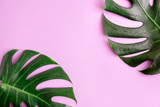 Flat lay top view Two green monstera leaves on bright pink background. Tropical mock up. space for text or lettering