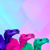 Contemporary minimal art collage. Colored camels. Colorful concept art - 238163231