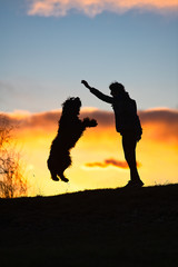 Large black dog with fur jumps towards the mistress holding cookie in hand. At colorful sunset © michelangeloop