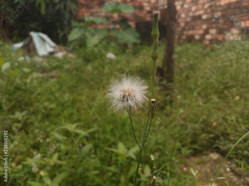 weeds in the backyard - 238168292
