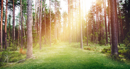 Forest nature sunshine