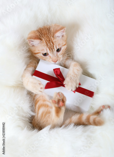 Little kitten with a gift in its paws