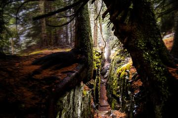 Natur im Wald