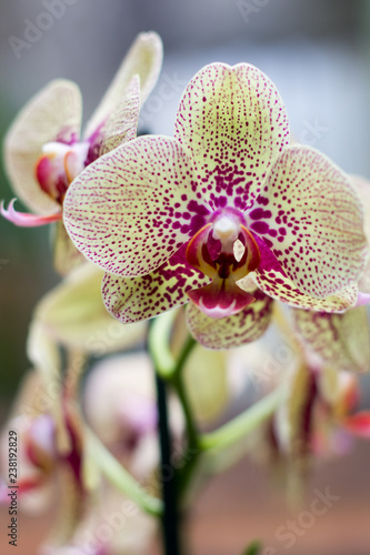 orchid on green background - 238192829