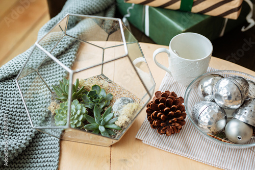 Decorative houseplants in winter. Florarium with fresh flowers on the table in a bright living room, decorated for Christmas.