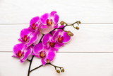 A branch of purple orchids on a white wooden background