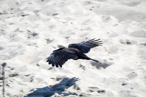 Leinwandbild Motiv Krähe fliegt tief über dem Strand