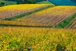 Chianti Region, Tuscany, Italy. Vineyards in autumn