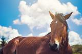 Beautiful brown horse resting
