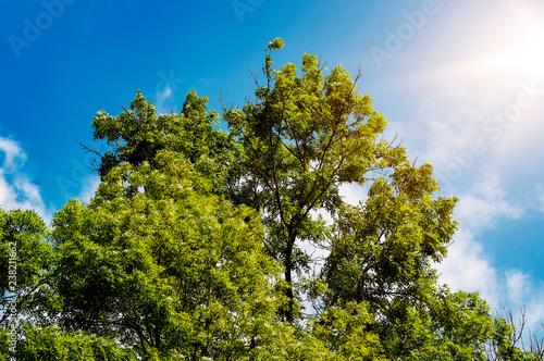Foto Murales Baumkrone bei blauem Himmel und Sonnenschein