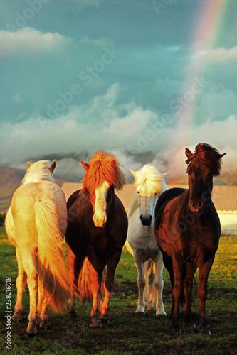 Rainbow. Horses