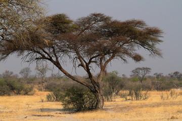 Die Savanne im Südlichen Afrika  © hecke71