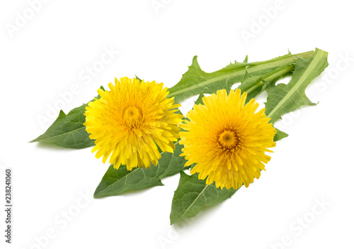 dandelion flowers and leaves - 238241060
