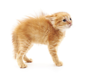 Scared little kitten.