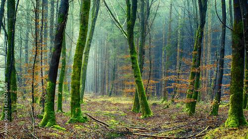Foto Murales landscape mountains trees