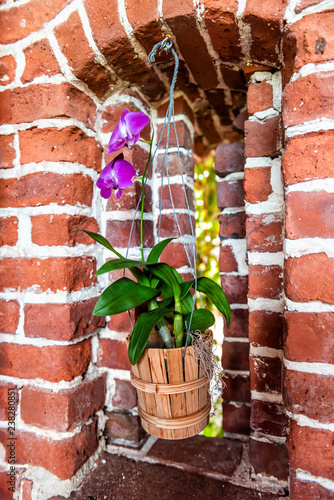 Key West, USA Brick abstract background fortress fort with window, Martello Tower with nobody, architecture in Florida, purple orchid flower pot