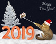 The cat in a Santa Claus hat makes selfie near the number 2019 made from sausage on the snow in the winter forest. Happy New Year.