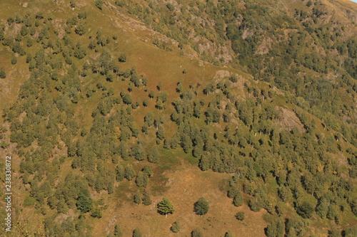 Die Baumgrenze verschiebt sich nach Oben; Birkenwald am Motto di Paraone - 238330872