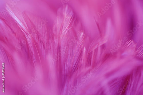 Blur Bird chickens feather texture for background, Fantasy, Abstract, soft color of art design. - 238336418
