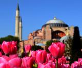 Hagia Sophia / Tulip