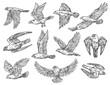Birds of prey sketches. Eagle, falcon and hawk