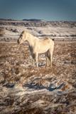 Cavallo solitario in una natura invernale Americana - 238403666