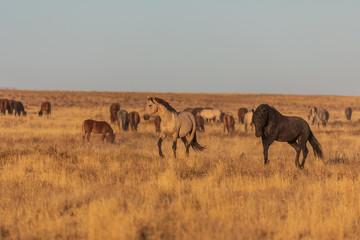 Wild Horses in the Utah Desert © natureguy