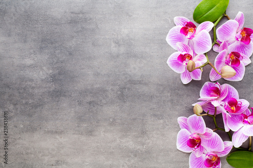 Beauty orchid on a gray background. Spa scene. - 238438691