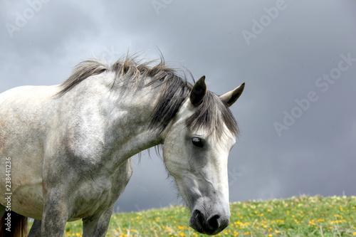 Portrait of a pretty horse