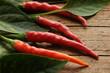 Capsicum Peperoncino rosso Տաքդեղ Paprika ft81092539 Chilis Solanaceae Πιπεριά