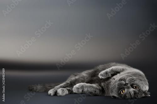 Cat. - 238483489