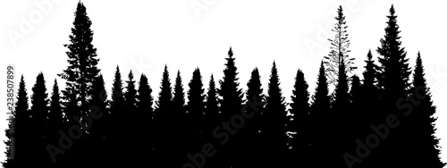 black fir forest isolated on white - 238507899