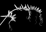 wild plant silhouette with curls isolated on black