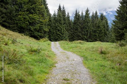 canvas print picture Weg durch den Tannenwald, Allgäu, Allgäuer Alpen, Bayern, Deutschland, Europa