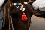 Esel geschmückt in Santorini
