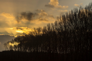 Spectacular cloud scape after a winter storm behind the silhouette of a row bare trees  © Frank