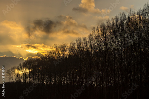 Spectacular cloud scape after a winter storm behind the silhouette of a row bare trees