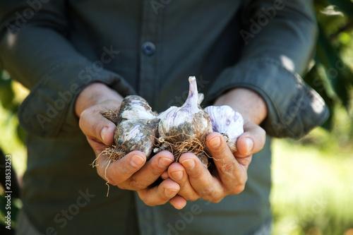 Farmer with garlic © mythja