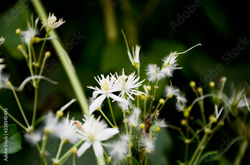 white flower in grass - 238545495