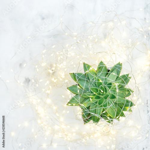 Succulent flower plant Christmas decoration light garland
