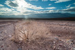 Dead dry bush desert landscape in death valley national park, climate change concept