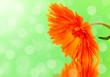 Leinwandbild Motiv An orange flower is reflected in the water on a green background