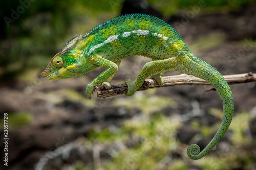 Asleep - Chameleon