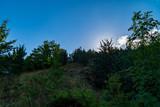 Cala il sole dietro la vegetazione del sentiero 201 - 238581428