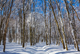 winter landscape, beautiful forest in a snow