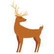 reindeer animal on white background